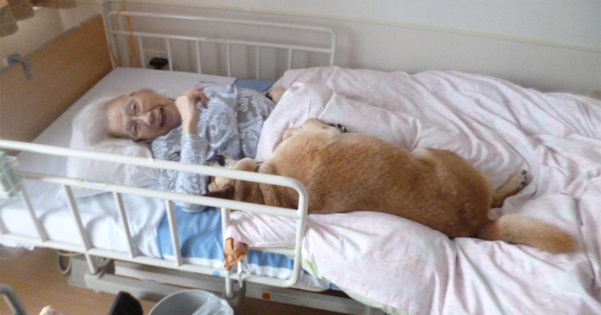 特別養護老人ホームに犬10匹と猫9匹