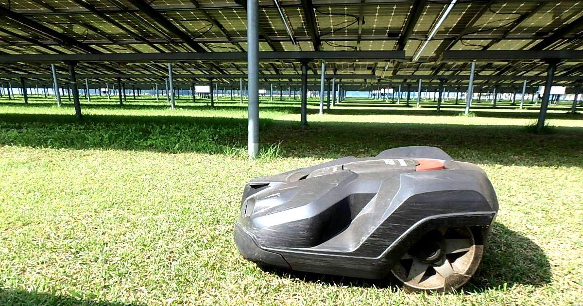 自律走行型ロボット除草機を使いこなす、広島・竹原の太陽光発電所 - 探訪 - メガソーラービジネス : 日経BP
