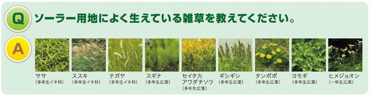 除草 剤 チガヤ
